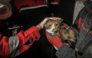 Η umut ( ελπίδα) έτσι ονομασαν τη γατούλα που βρέθηκε μετά από 29 ώρες κάτω από ... 2