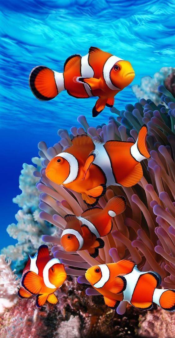 Όμορφα ψάρια... 1