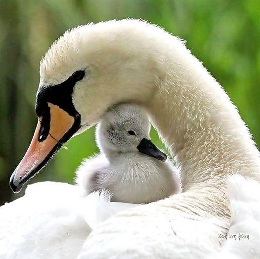 Αξιολάτρευτη μητρική προστασία.... 1