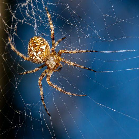 Η αράχνη: Παλεύοντας με τον εαυτό μας... 1