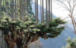 Οι Ιάπωνες έχουν αναπτύξει εδώ και 700 χρόνια μια τεχνική να παράγουν ξύλα χωρίς... 2