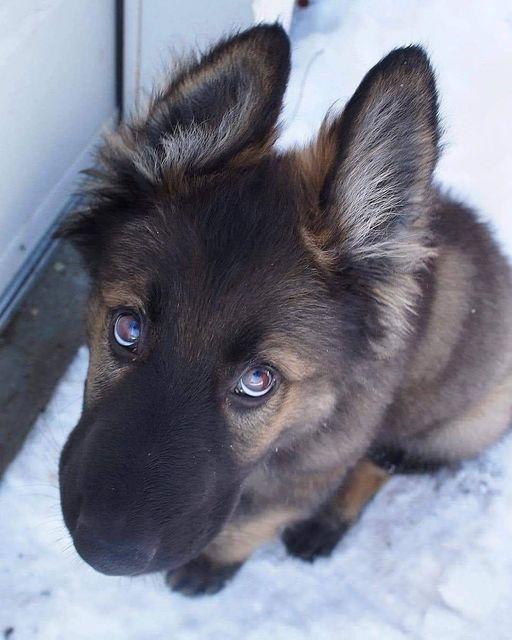 Μην πειράξετε τα σκυλιά....Σας εμπιστεύονται επ ' άπειρον........ 1