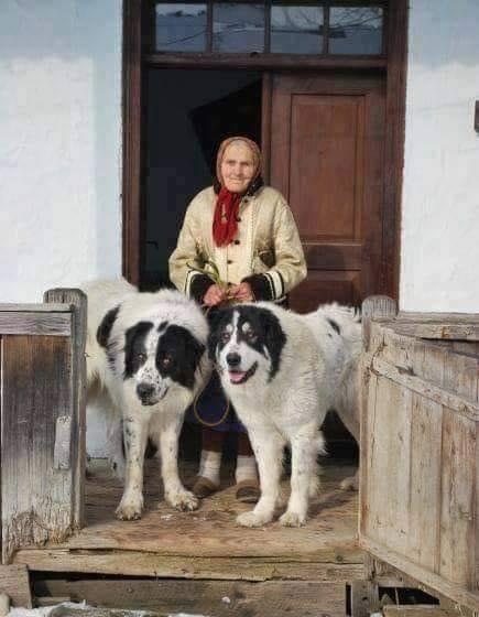 Νάσαι καλα γιαγιά με τους προστάτες που εχεις!... 1