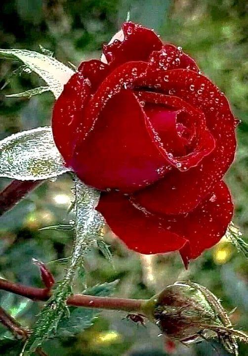 Τα πιο όμορφα λουλούδια γεννιούνται μετά από σκληρούς χειμώνες... 1