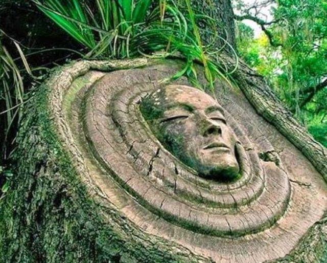 Τι μας διδάσκουν τα δέντρα για τη ζωή...... 1