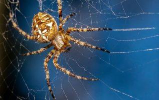 Η αράχνη: Παλεύοντας με τον εαυτό μας... 3