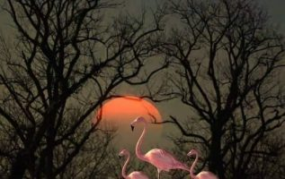 Καλό βράδυ φίλοι μου!... 6