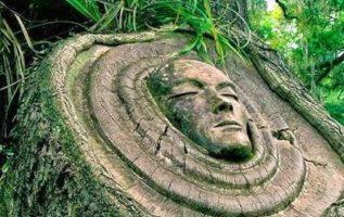 Τι μας διδάσκουν τα δέντρα για τη ζωή...... 3