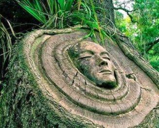 Τι μας διδάσκουν τα δέντρα για τη ζωή...... 5