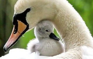 Αξιολάτρευτη μητρική προστασία.... 5