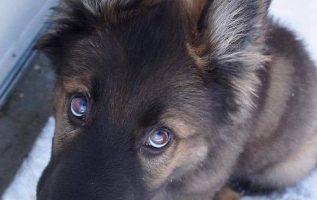 Μην πειράξετε τα σκυλιά....Σας εμπιστεύονται επ ' άπειρον........ 2