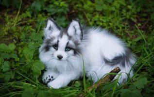 αλεπού ! πόσο όμορφη και ιδιαίτερη <3... 2