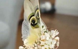 Παράξενο σπάνιο έντομο , σαν πεταλούδα... 5