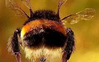 Αεροδυναμικά το σώμα μιας μέλισσας δεν είναι φτιαγμένο για να πετάξει. Το καλό ε... 3