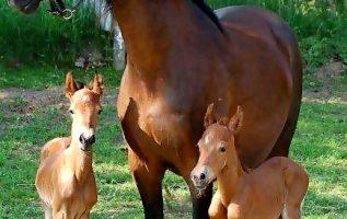 Μια όμορφη οικογένεια... 2