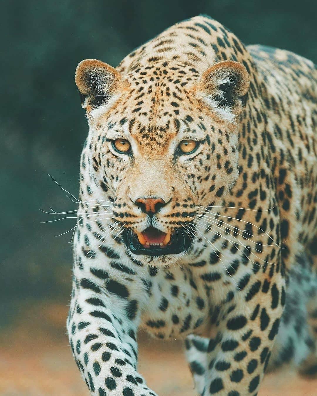 68973 Ωραία τοπία και μέρη, Άγρια Φύση, Όμορφα ζώα 14
