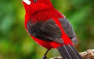 69089 Ωραία τοπία και μέρη, Άγρια Φύση, Όμορφα ζώα 4