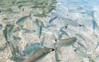 Corfu island #Greece !!.... 4