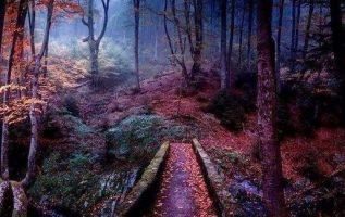 Dream Nature... 4