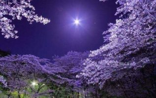 Beautiful nature, 5
