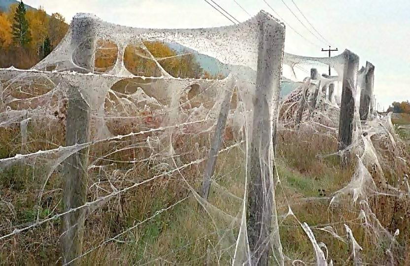 .Εποχή της αράχνης στην Αυστραλία... 2