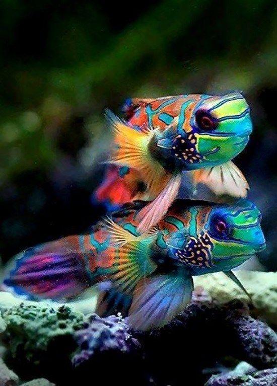 Όμορφα ψάρια... 2