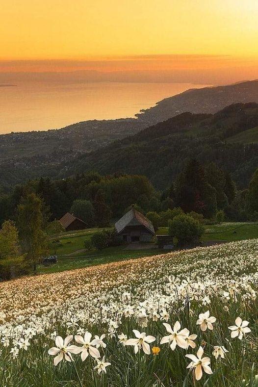 Beautiful nature.... 1