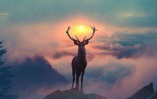 87201 Ωραία τοπία και μέρη, Άγρια Φύση, Όμορφα ζώα 7