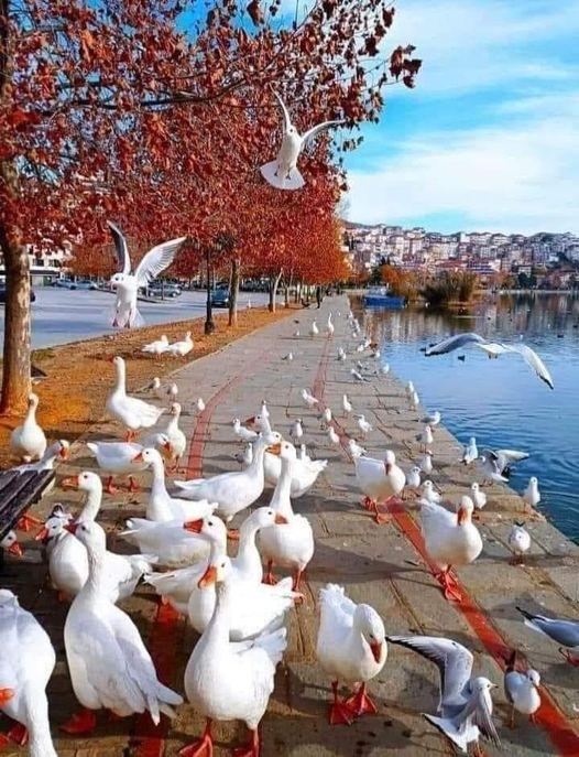 87235 Ωραία τοπία και μέρη, Άγρια Φύση, Όμορφα ζώα 3