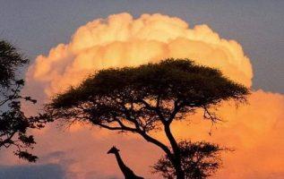 Τανζανία,... 5