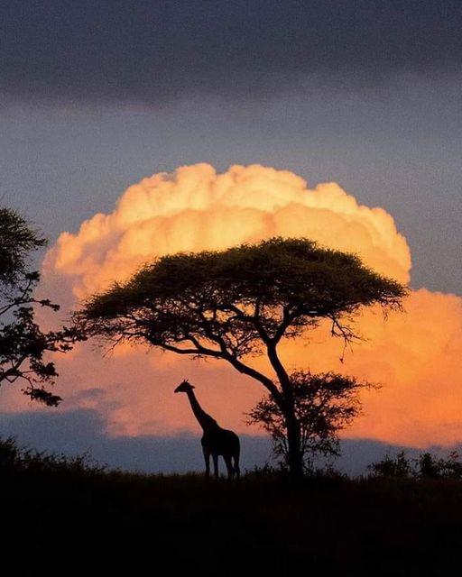 Τανζανία,... 1