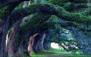 Βελανιδιές 300 ετών, Oak Alley Plantation, Λουιζιάνα... 7