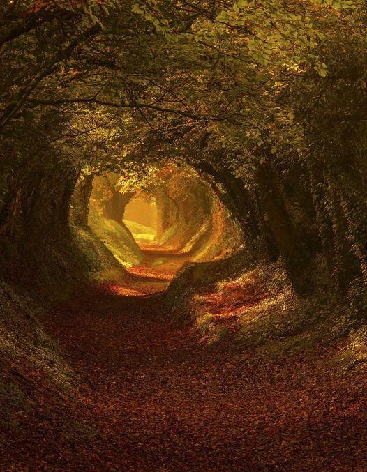 Ancient Roman Road, West Sussex, UK... 1