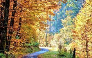 Chiemgau,Bavaria Germany... 4