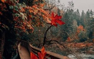 Fall City, Washington : @bethkellmer [ IG]... 5