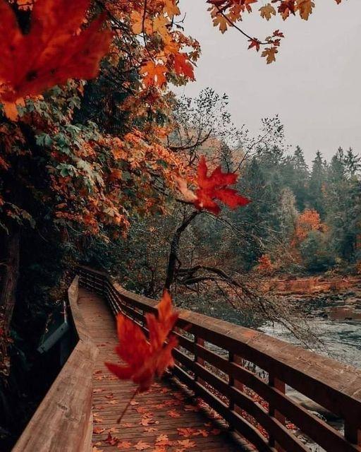 Fall City, Washington : @bethkellmer [ IG]... 1