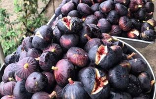 Mmm!!! Figs in Greece are the best !!... 5