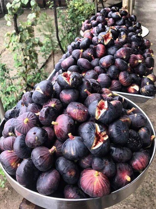 Mmm!!! Figs in Greece are the best !!... 1