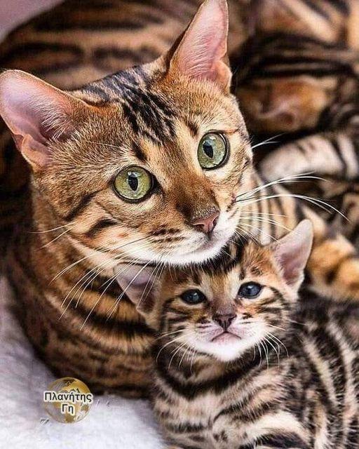 Όταν κοιτάζω τα μάτια ενός ζώου, δεν βλέπω ζώο.... 1
