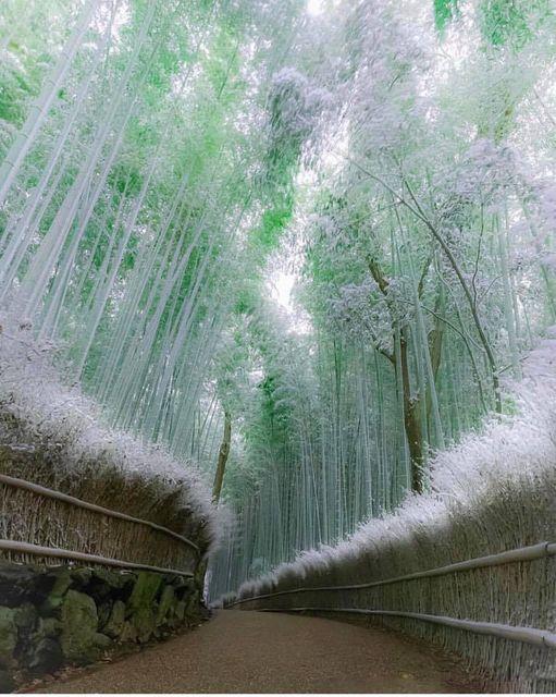 Δάσος με μπαμπού στο Kyoto στην Ιαπωνία.!!!... 1
