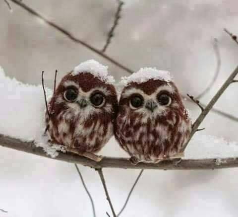 Δύο μωρά κουκουβάγιες στο χιόνι ...... 1