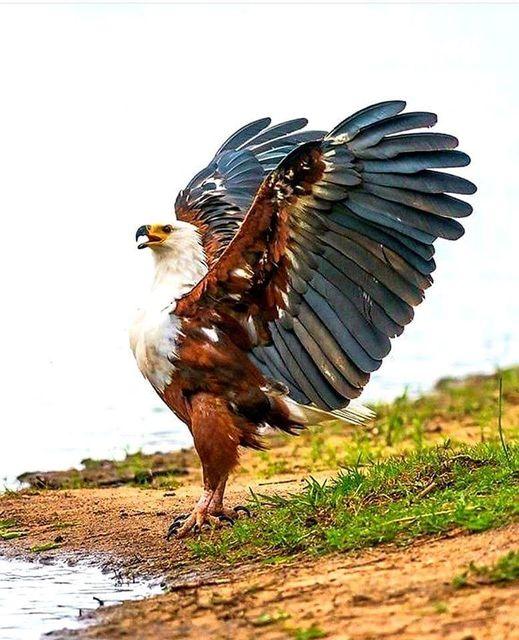 Καμάρι ομορφιά δύναμη ελευθερία... 1