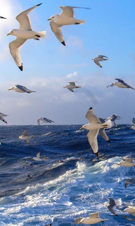 Με το βλέμμα να ταξιδεύει πάνω από θάλασσες... 1