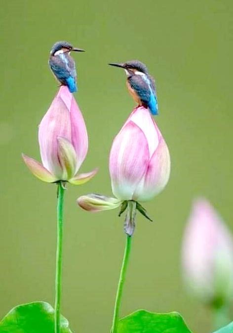 Να λατρεύεις τη στιγμή, να αγαπάς και να νοιάζεσαι με όλη σου την καρδιά,... 1