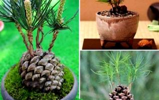 Μεγαλώστε ένα μικρό κομμάτι της φύσης στο σπίτι σας!... 2