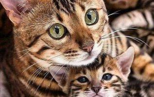 Όταν κοιτάζω τα μάτια ενός ζώου, δεν βλέπω ζώο.... 2