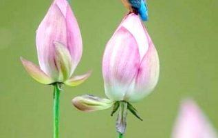 Να λατρεύεις τη στιγμή, να αγαπάς και να νοιάζεσαι με όλη σου την καρδιά,... 3