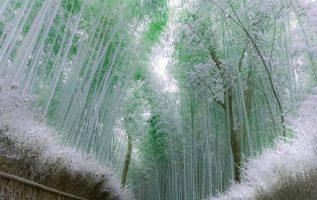 Δάσος με μπαμπού στο Kyoto στην Ιαπωνία.!!!... 7