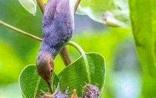 Μια μητέρα της φύσης <3... 5