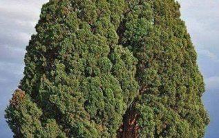 Εκπληκτική, ομορφιά του δέντρου... 3